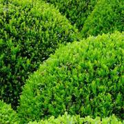 Marbella- Landscape & Garden Design Studio-